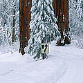 Winter Road Into Sequoia National Park by Panoramic Images