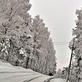 Winter Road  by Stefan Pettersson