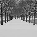 Winter Rows by Lauri Novak