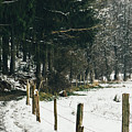 Winter Rural Pathway by Pati Photography
