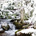 Winter Rushing Stream by Thomas R Fletcher