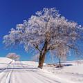 Winter Scene Genessee, Id by Marcia Darby