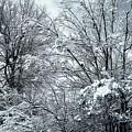 Winter Scene by Jill Lang