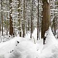 Winter Scene Print by Gwen Gibson