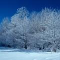 Winter Scene by Raju Alagawadi