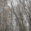 Winter Scenery by Hideaki Sakurai