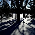 Winter Shadows 2 by Tom Reynen