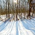 Winter Shadows by Tim Fitzwater