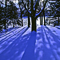 Winter Shadows by Tom Reynen