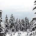 Winter Shangri-la by Will Borden