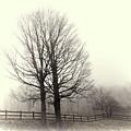 Winter Silhouette by Grace Dillon