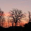 Winter Skies by Lynne Iddon