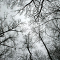 Winter Sky by Andrei Shliakhau