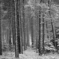 Winter, Slaley Woods by Iain Duncan