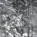 Winter Snow by John Black