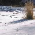 Winter Sparkle by Yolanda Lange