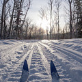 Winter Sport X-country Skis In Sunny Forest Tracks by Stephan Pietzko