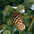 Winter Spruce by Rick  Monyahan