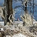 Winter Storm Ashley 2015 #2 by Ms Judi