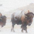 Winter Storm by Derald Gross