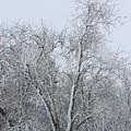 Winter Storm by Tonya Hance