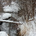 Winter Stream by Betty-Anne McDonald