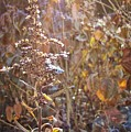 Winter Sun by JAMART Photography