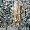 Winter Sun by Joshua Stoker