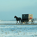 Winter Sun On Amish Buggy by David Arment