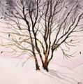 Winter Sunrise by Sonja Jones