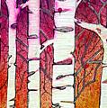 Winter Sunset Birch by Tonya Doughty