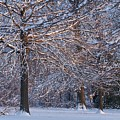 Winter Sunset by Hideaki Sakurai