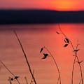 Winter Sunset I by Michele Steffey