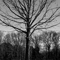 Winter by Susan Crittenden
