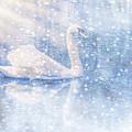 Winter Swan by Geraldine DeBoer