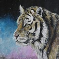 Winter Tiger by Duncan Sawyer
