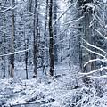 Winter by Todd Bissonette