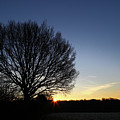 Winter Tree At Sunrise by James Brunker
