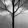 Winter Tree by Carol Groenen