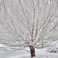Winter Tree by Eileen Brymer