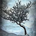 Winter Tree II by Ronald Bolokofsky