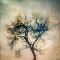 Winter Tree by Joye Ardyn Durham