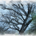 Winter Tree by Paulette B Wright
