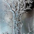 Winter Tree by Randall Weidner