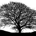 Winter Tree by Robert Edgar