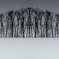 Winter Tree Symmetry Long Horizontal by John Williams