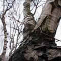 Winter Tree by Valia Bradshaw