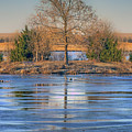 Winter Tree - Walnut Creek Lake by Nikolyn McDonald