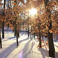 Winter Trees #1 by Dane Elcar