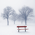 Winter trees and bench in fog by Elena Elisseeva